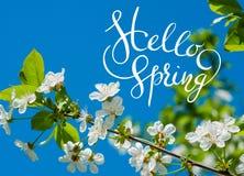L'Apple-arbre de floraison sur le fond de l'herbe verte avec des lettres bonjour sprintent Photographie stock