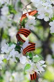 l'Apple-arbre fleurit avec le ruban de St George sur le fond blanc 9 mai Victory Day Images stock