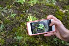 l'applicazione del manuale dell'identificazione di pianta utilizza technlolgy nella natura uplugged immagine stock libera da diritti