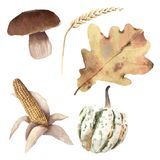 L'aquarelle Autumn Harvest Set Hand peint objecte le mushroo de blé Photos libres de droits