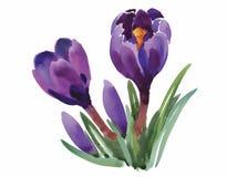 L'aquarelle fleurit dans le style classique sur un fond blanc Photos stock