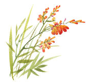 L'aquarelle fleurit dans le style classique sur un fond blanc Image stock