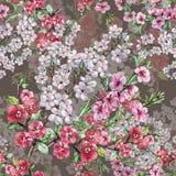 L'aquarelle fleurit la cerise et la pêche d'Apple Modèle sans couture d'ouvrage sur Gray Background Photographie stock libre de droits