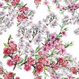 L'aquarelle fleurit la cerise et la pêche d'Apple Modèle sans couture d'ouvrage sur un fond blanc Images stock