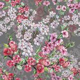 L'aquarelle fleurit la cerise et la pêche d'Apple Modèle sans couture d'ouvrage sur un fond Gris-bleu Photos stock