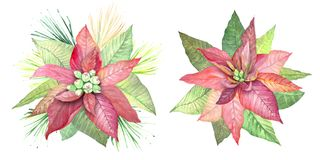 L'aquarelle fleurit la poinsettia Illustration de Vecteur