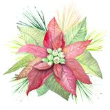 L'aquarelle fleurit la poinsettia Illustration Libre de Droits