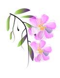 L'aquarelle fleurit le fond Photo libre de droits