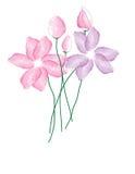 L'aquarelle fleurit le fond Photos libres de droits