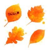 L'aquarelle orange part de l'ensemble de vecteur Photos stock