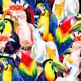 L'aquarelle parrots le modèle sans couture Photos libres de droits