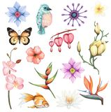 L'aquarelle a placé avec les fleurs exotiques et l'élément animal photos stock