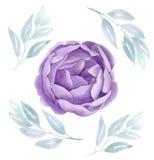 L'aquarelle pourpre s'est levée Illustration florale botanique pivoine lilas de fleur Carte de mariage Valentines de vintage d'am illustration de vecteur