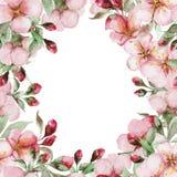 L'aquarelle Sakura fleurit la carte Photos libres de droits