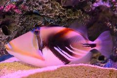 L'aquarium du Michigan de vie marine Photos libres de droits