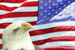 L'aquila calva ha impostato contro la bandiera americana Immagini Stock