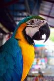 L'ara bleu-et-jaune, est un grands perroquet et x28 sud-américains ; Ararauna& x29 d'arums ; Images stock