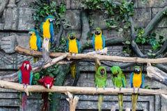L'ara d'oiseau de perroquets se reposent sur une branche Photo libre de droits