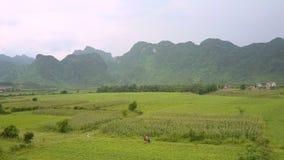 L'arachide et le maïs se développent sur le grand champ entouré par des montagnes banque de vidéos