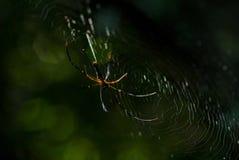 L'arachnide d'araignée se repose dans sa tanière sur le fond noir images stock
