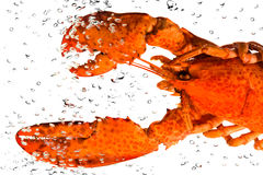 L'aragosta in acqua Immagini Stock Libere da Diritti