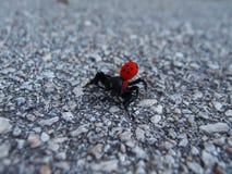 L'araignée de bouton photographie stock libre de droits