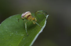 L'araignée de Ghost Images stock