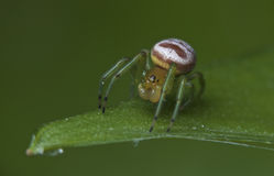L'araignée de Ghost Photos stock