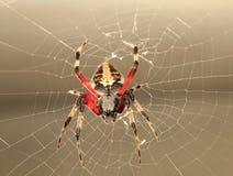 L'araignée de jardin arrière de Lit là-dessus est Web Photos stock