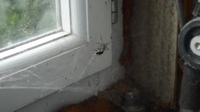 L'araignée et la mouche en Web clips vidéos