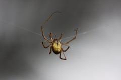 L'araignée fait le Web Images stock
