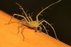 L'araignée jaune en nature chez la Thaïlande image stock