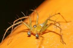L'araignée jaune en nature chez la Thaïlande images libres de droits