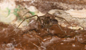 L'araignée reste à la maison Photographie stock