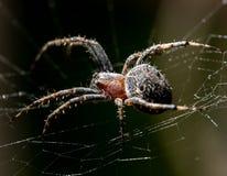 L'araignée se repose sur un Web sur la chasse images stock