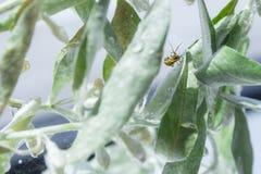 L'araign?e est sur marcher sur son Web photos libres de droits