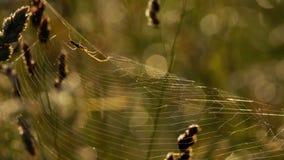 L'araign?e tisse un Web banque de vidéos