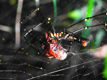 L'araignée attaque la victime Photo stock