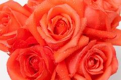 L'arancia è aumentato Fotografia Stock