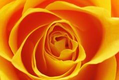 L'arancia è aumentato Fotografie Stock
