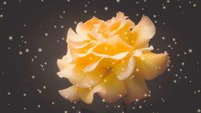 L'arancia è aumentato su un filtro o su un effetto nero dal primo piano del fondo archivi video