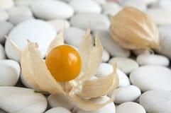 L'arancia di physalis peruviana ha maturato i frutti in buccia sulla tavola bianca dei ciottoli fotografia stock