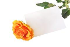 L'arancio è aumentato con la scheda in bianco Immagini Stock