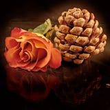 L'arancio di trattamento di bellezza è aumentato Fotografie Stock