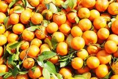 L'arancio fresco e sugoso fotografie stock