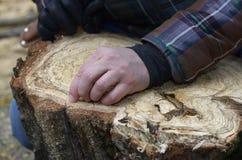 L'arboricoltore mostra la sezione trasversale di un tronco di albero fotografia stock libera da diritti