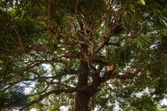 L'arbre énorme Photo libre de droits