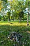 L'arbre a été coupé dans le jardin et beaucoup l'arbre a l'éclairage du lever de soleil i Photo stock
