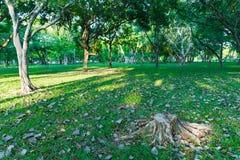 L'arbre a été coupé dans le jardin et beaucoup l'arbre a l'éclairage du lever de soleil i Photos stock