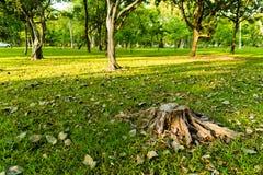 L'arbre a été coupé dans le jardin et beaucoup l'arbre a l'éclairage du lever de soleil i Image stock